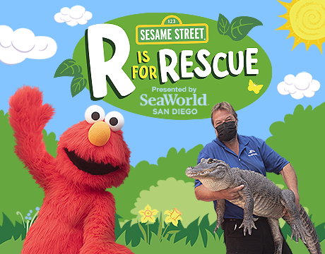 Sea World: R is for Rescue Show | Click to Learn More